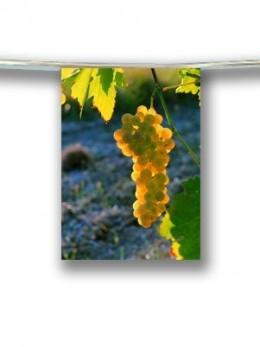 Guirlande raisin blanc 4m