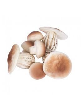Lot de 7 champignons en mousse