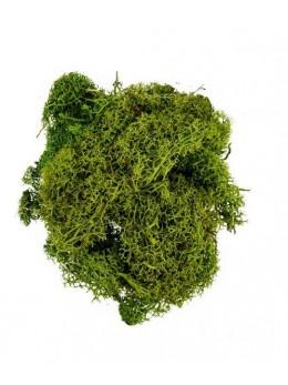 Sachet mousse vert clair 30 grammes